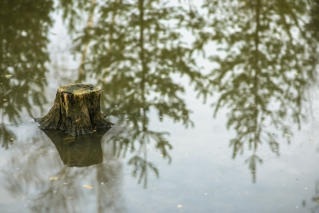 Stump in water during flood. Stock Photo - 17469218