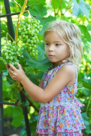 tresses: Beautiful little girl with pigtails holding bunch of grapes in summer green garden.