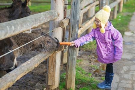 wild donkey: Beautiful little girl in pink coat feeding donkey. Stock Photo