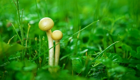 Two mushrooms in summer green forest. photo