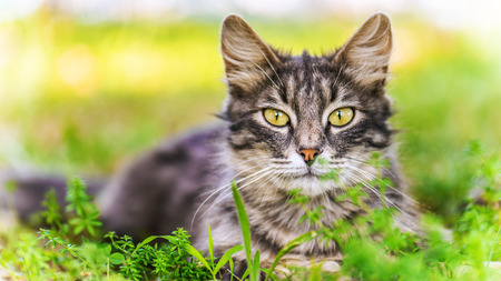 Beautiful cat in citys green summer garden. photo