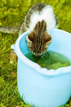 Small kitten drinks water from blue bucket on green lawn. photo