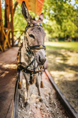 cartage: Donkey in harness carries wooden sleepers trailer with children. Stock Photo