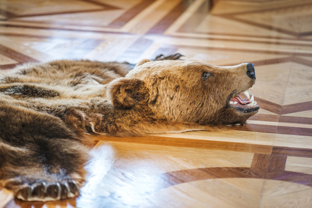 Skin killed bear in luxurious old princely castle.