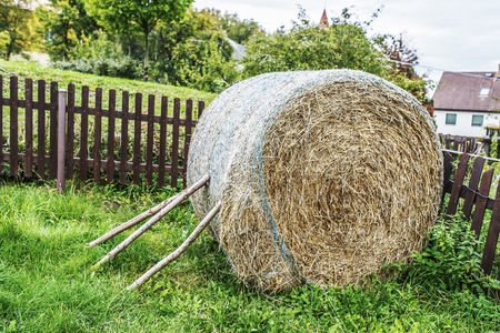 Hay is grass, legumes or other herbaceous plants that have been cut, dried, and stored for use as animal fodder, particularly for grazing livestock such as cattle, horses, goats, and sheep. photo