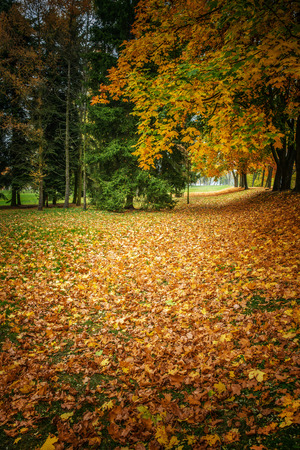 Fallen leaves in autumn city park. photo