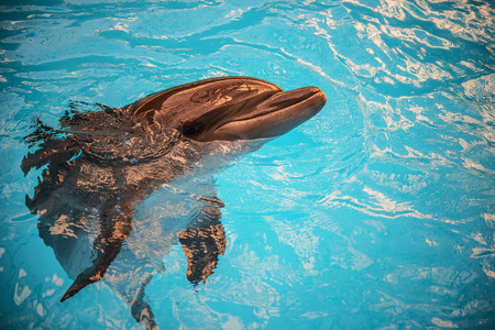 warm water fish: Dolphin pokes head out of water in basin of oceanarium. Stock Photo