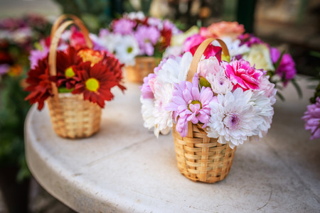 asterids: Chrysanthemums, sometimes called mums or chrysanths, are flowering plants of the genus Chrysanthemum in the family Asteraceae.