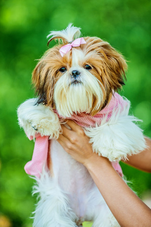 allegiance: beautiful young woman standing summer park holds dog her arms Stock Photo