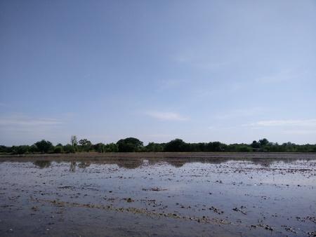 farmland: farmland and sky