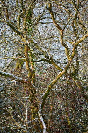 Bare leafless snow covered deciduous trees and bushes