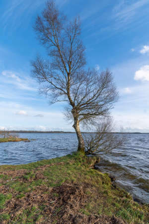 Birch tree on the lake shore with blue sky and rough waters.