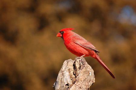 Go Arizona Cardinals! photo