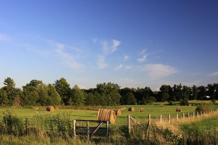 Hay bales lined up in a meadow. photo