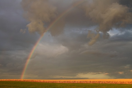 verdant: Country rainbow over a corn field in Missouri.