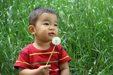 Japanese boy blowing dandelion seeds photo
