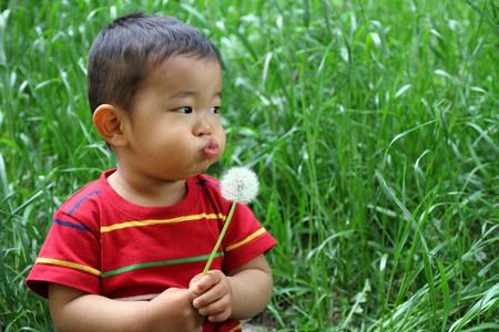Japanese boy blowing dandelion seeds photo