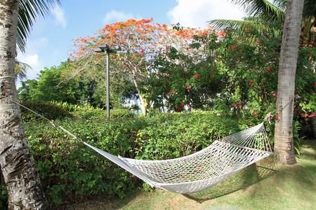 hammock photo