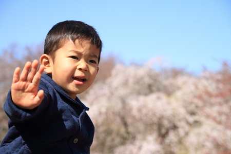 only boys: A Japanese boy and cherry blossoms (4 years old)