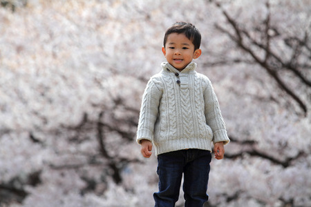 Japanese boy and cherry blossoms Stock Photo