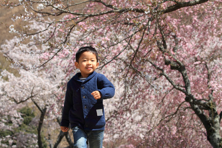 blossom tree: Running Japanese boy and cherry blossoms Stock Photo
