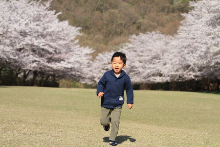 Running Japanese boy and cherry blossoms photo