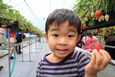日本男児とイチゴ