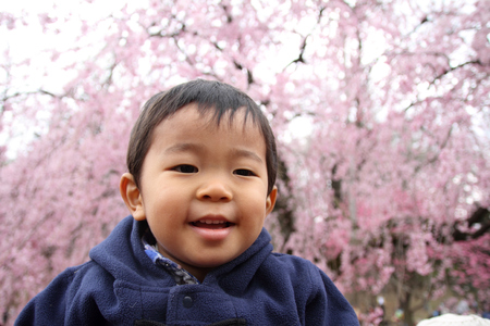 Japanese boy and cherry blossoms (2 years old) photo