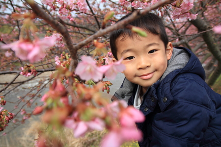 5 10 years old: Cherry blossoms and Japanese boy (5 years old)