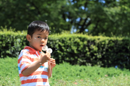 blowing dandelion: Japanese boy blowing dandelion seeds (4 years old) Stock Photo