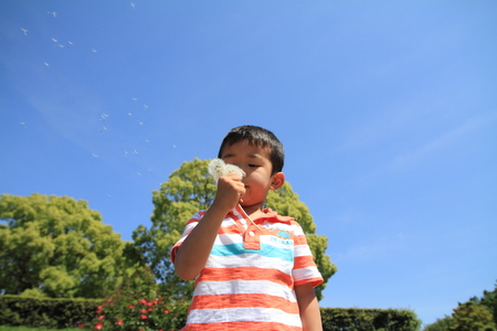 Japanese boy blowing dandelion seeds (4 years old) photo