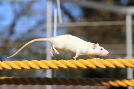 ロープの家マウス