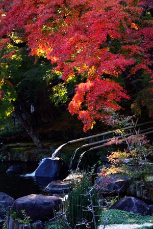 hase: Autumn leaves at Hase temple, Kamakura, Japan Stock Photo