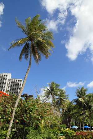 guam: Palm tree in Guam, Micronesia Stock Photo