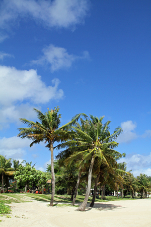 micronesia: Palm tree in Guam, Micronesia Stock Photo