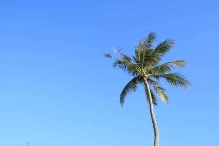 micronesia: Palm trees in Guam Micronesia Stock Photo