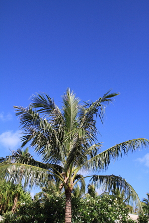 micronesia: Palm trees in Guam Micronesia Stock Photo