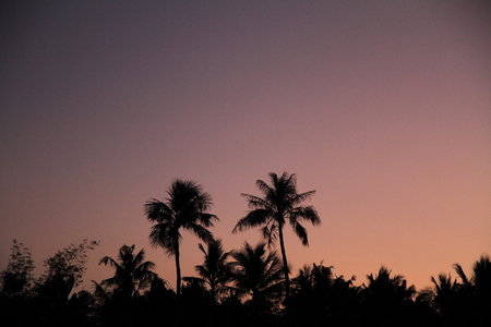 micronesia: Palm trees at sunset in Guam Micronesia