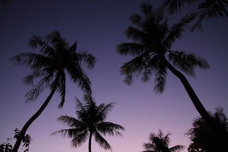 micronesia: 괌 마이크로 네시아에서 일몰 야자수