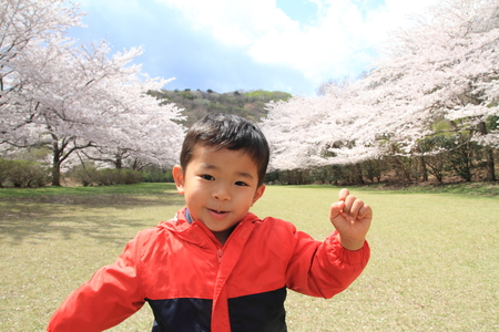 4 years old: Japanese boy and cherry blossoms (4 years old)