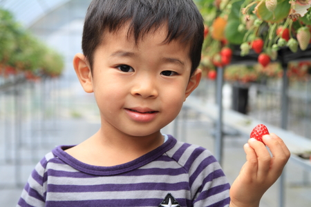 4 years old: Japanese boy eating strawberry (4 years old) Stock Photo