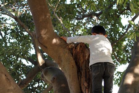 6 years: Japanese boy climbing the tree (6 years old)
