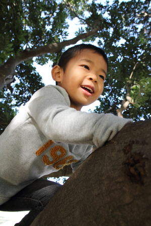 six persons: Japanese boy climbing the tree (6 years old)