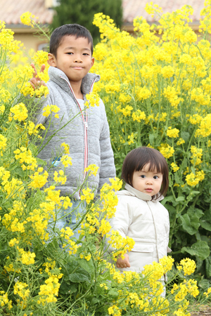 6 year old: Japanese brother and sister (6 years old boy and 1 year old girl) in yellow field mustard