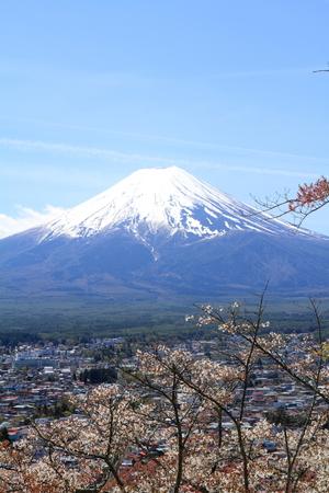 sengen: Mt. Fuji and cherry blossoms from Arakura yama Sengen park