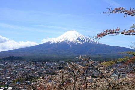 storied: Mt. Fuji and cherry blossoms from Arakura yama Sengen park