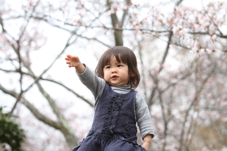 2 years old: Japanese girl and cherry blossoms (2 years old) Stock Photo