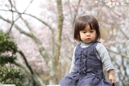 2 years: Japanese girl and cherry blossoms (2 years old) Stock Photo