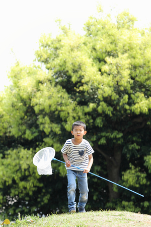 6 years: Japanese boy collecting insect (6 years old) Stock Photo