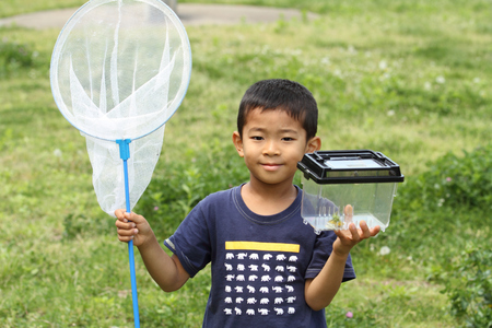 collecting: Japanese boy collecting insect (6 years old) Stock Photo